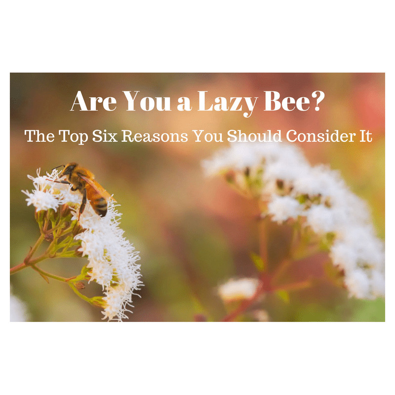 Are You a Lazy Bee? The Top Six Reasons You Should Consider It